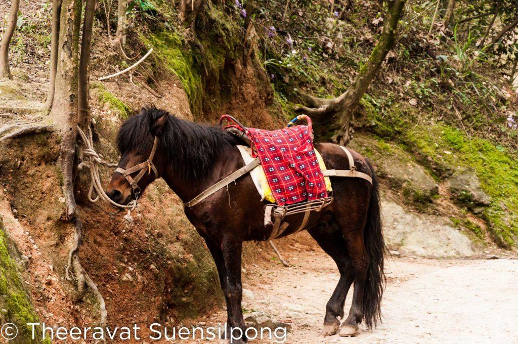 ม้าตัวนี้สามารถพาเราขึ้นยอดเขาพริกได้